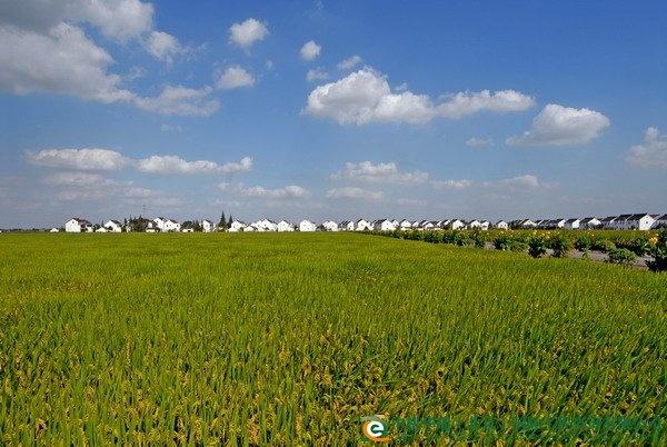 常熟乡村农田风景图片