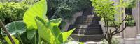 东南亚植物景观