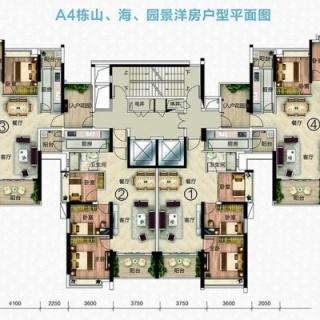 A4栋户型平面图