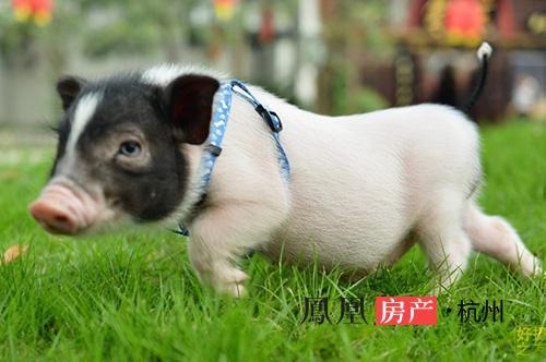 现实版疯狂动物城 五一小长假驾临杭州!