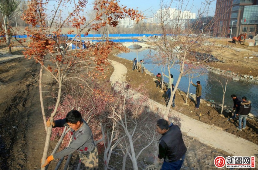 水磨沟区超额完成绿化任务 至本月底还将完成植树7118株